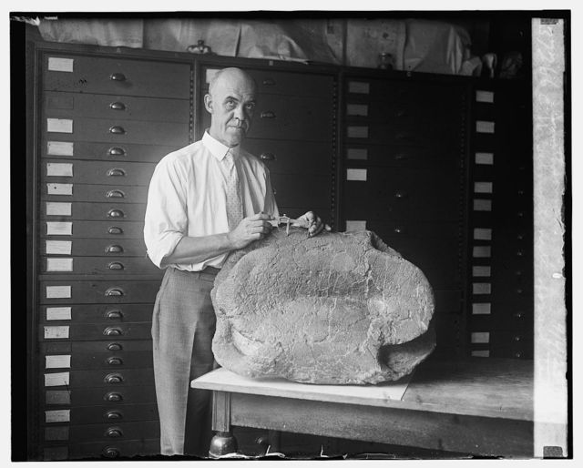 C.W. Gilmore with fossil turtle, Smithsonian, 9/4/25