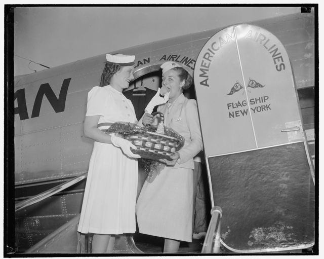 Peaches, three of a kind. Washington, D.C., July 11. Mrs. E.C. Gathings, wife of the congressman from Arkansas today received a basket of peaches via American Airlines, to be presented to the President tomorrow. The peaches commemorate the annual Peach Festival to be held in Forest City, Ark., July 27th. Next--peaches- -left to right, Mrs. E.C. Gathings and stewardess Doris Fontaine