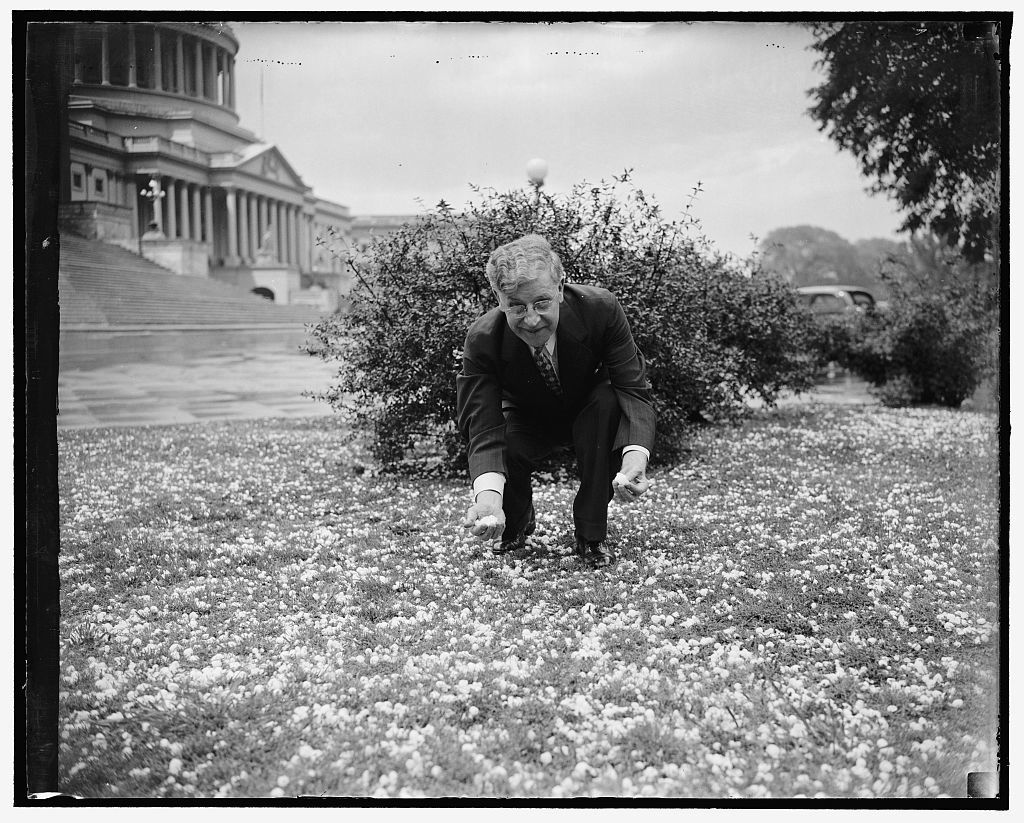Rep. Patrick Boland of Pa., house whip, inspects hail storm, 4/29/38