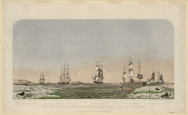 Right whaling in Behering Straits & Arctic Ocean with its varieties