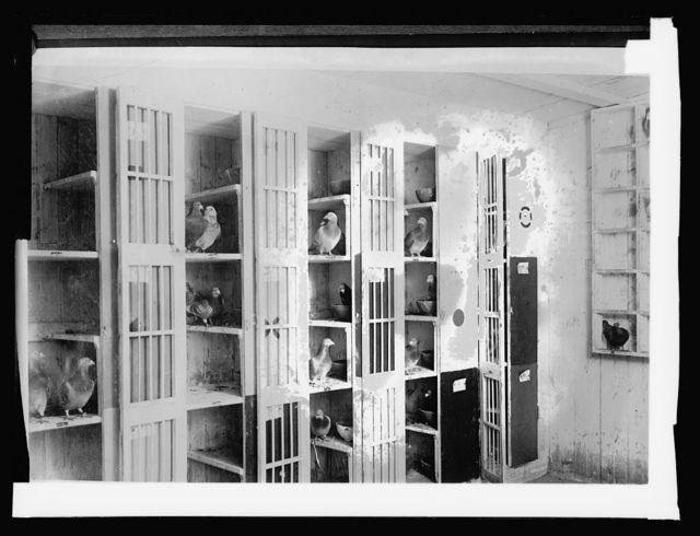 Signal Corps Lofts, 11/30/20