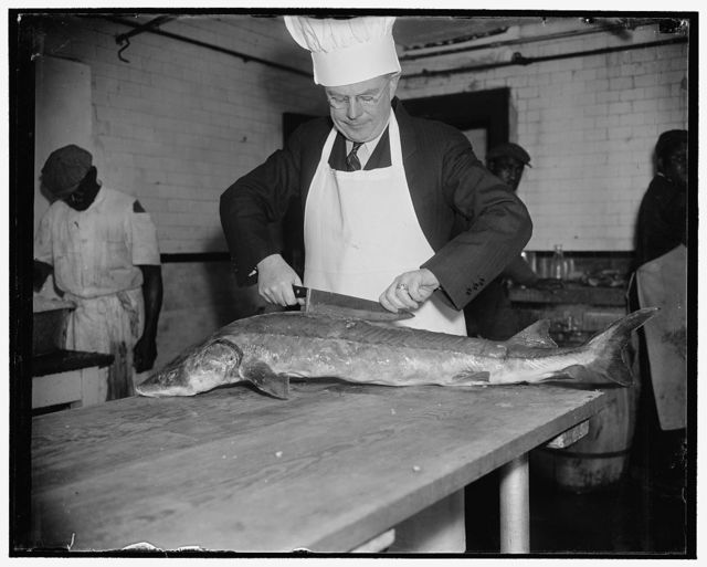 Tries culinary skill. Washington, D.C., March 10. Senator F. Ryan Duffey, democrat of Wisconsin, proud of his culinary skill tries his hand on a 35-pound sturgeon presented to him at the Capitol today by Maurice Fitzsimmons, Democrat Committeeman from Wisconsin. The fish, which was caught in Lake Winnebago, Wisc., was later served at a luncheon to Congressional colleagues of Senator Duffey, 3/10/38