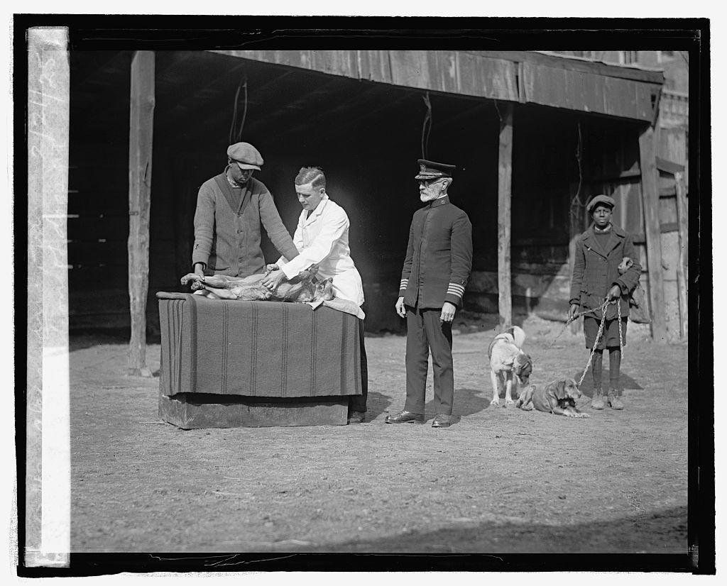 Vaccination of dogs at Alexandria, Va., 2/21/25