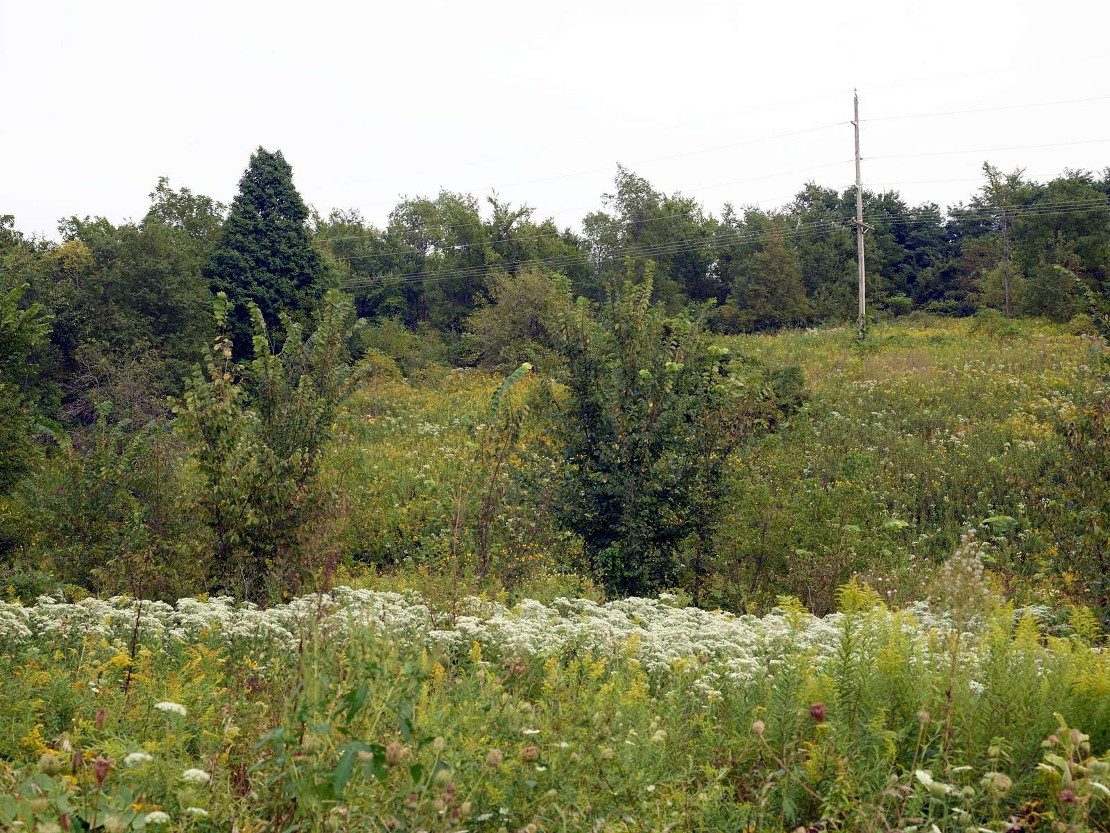 Field of wildflowers in Mineral Point, Wisconsin