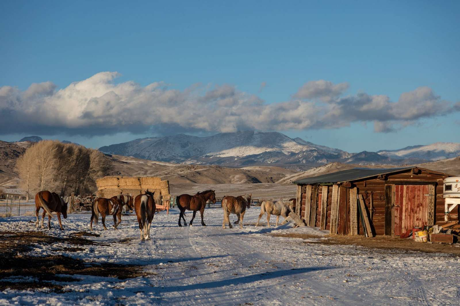 Horses enjoy a last few minutes outside their corral after returning from a romp in the snow at the Midland Ranch, in the shadow of the Wind River Range of the Northern Rockies in remote Sweetwater County, Wyoming