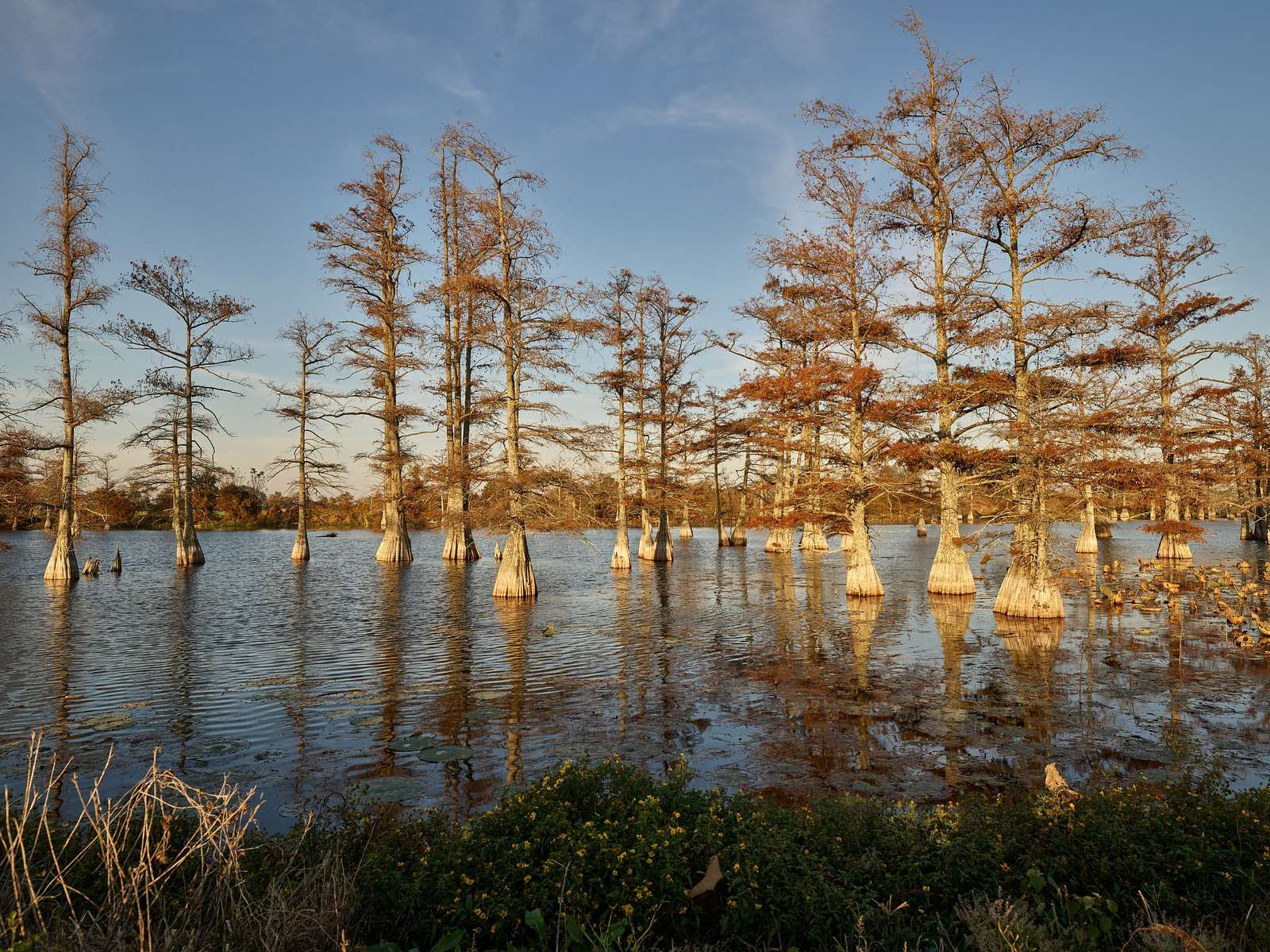 Low winter light catches the cypress trees in a swamp near Dublin, Mississippi