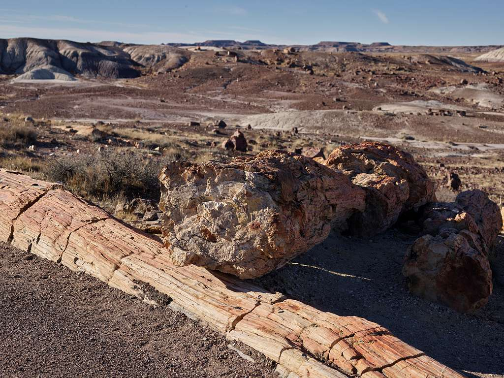 Fossilized tree specimens in the Petrified Forest, now part of a U.S. national park near Holbrook in Arizona's remote Navajo and Apache counties