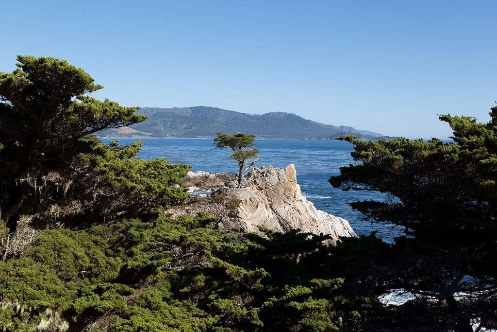 Lone cypress on the 17-Mile Drive, Monterey Peninsula, California