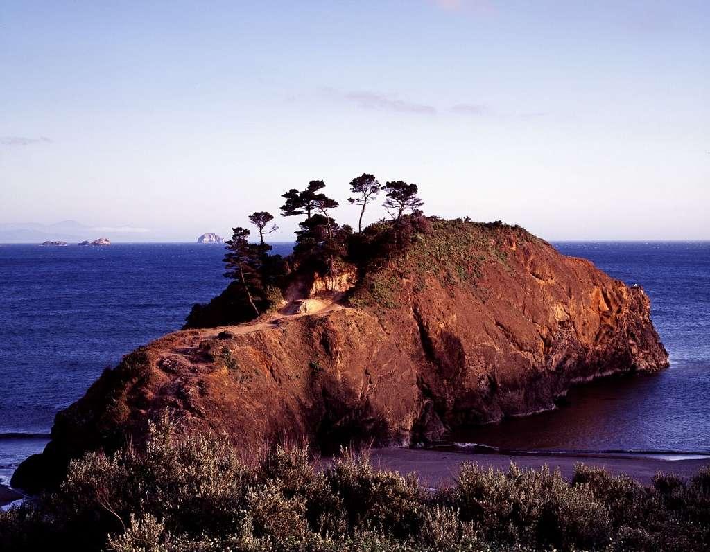 Cypress trees on a small island on the Pacific coast near Carmel, California