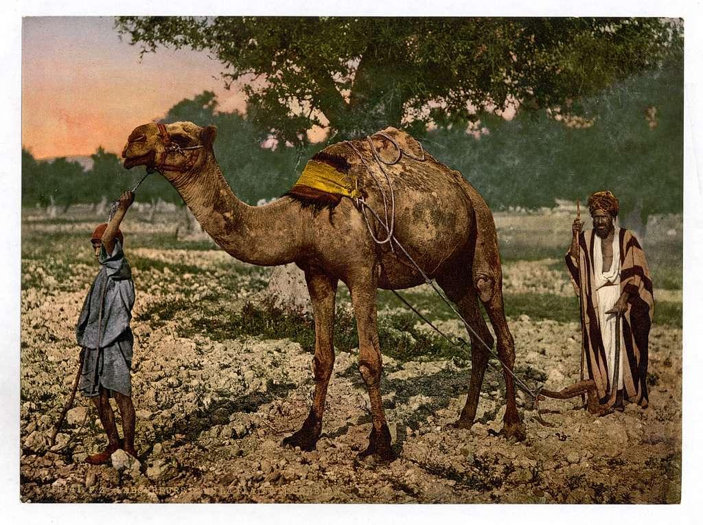 [Laborers, Plain of Esdraelon, Holy Land, (i.e., Plain of Jezreel, Israel)]