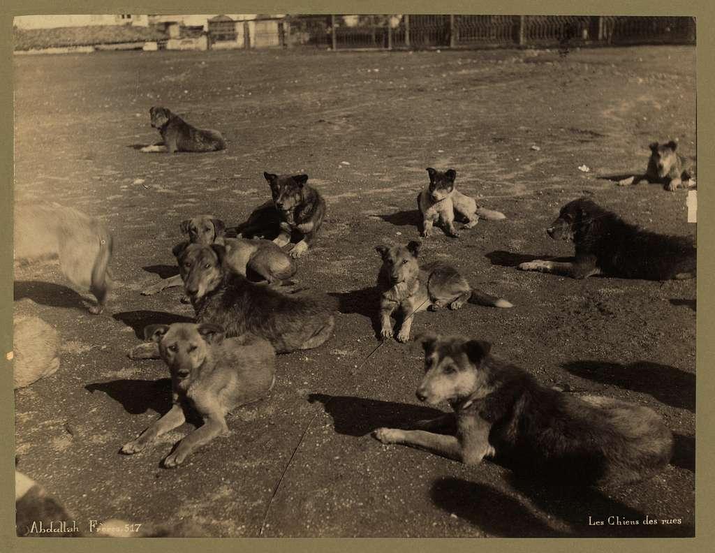Les chiens des rues / Abdullah Frères.