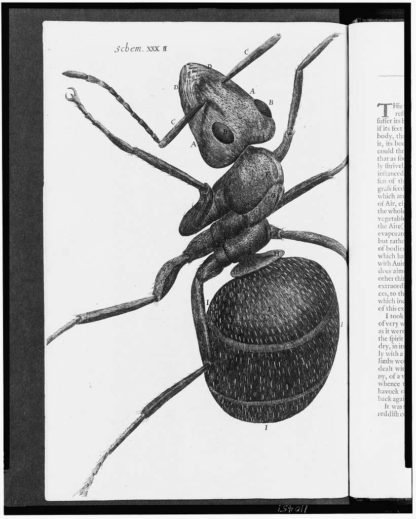 [Microscopic view of an ant]
