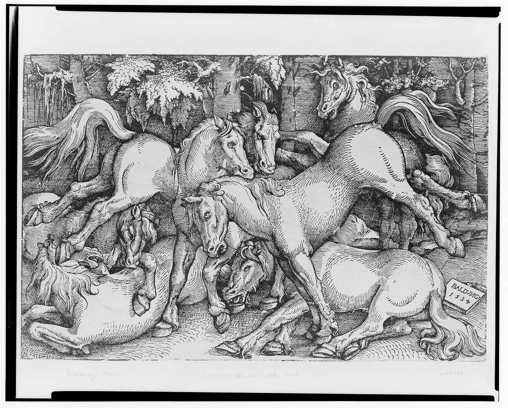 [Seven horses in a wood] / Baldung, 1534.