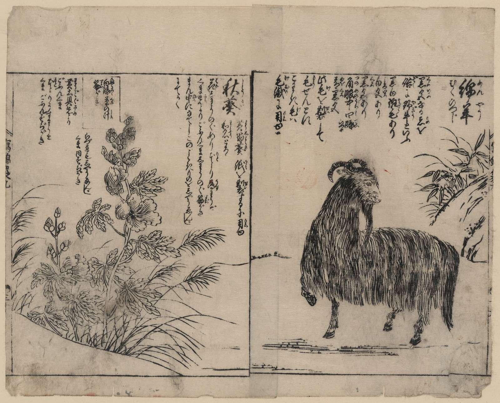 [Ram and autumn mallow]
