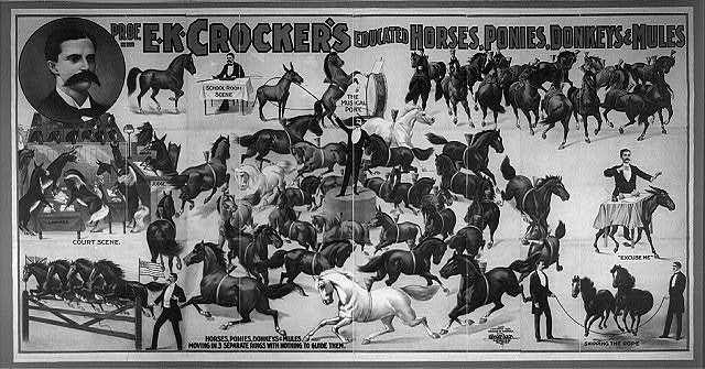 Prof. E.K. Crocker's educated horses, ponies, donkeys & mules