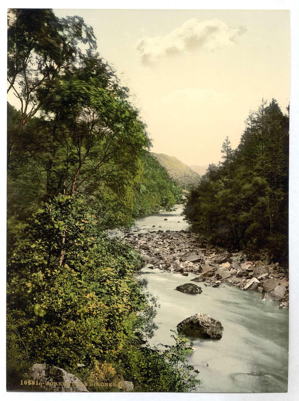 [Borrowdale Birches, II., Lake District, England]
