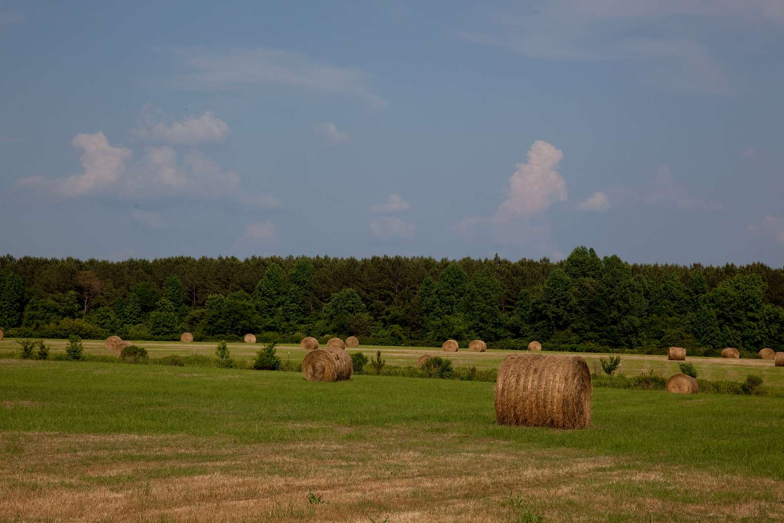 Hay bales dot the landscape of the 69.2 acre farm owned by Johnny and Chinita Hinton near Carrollton, Alabama