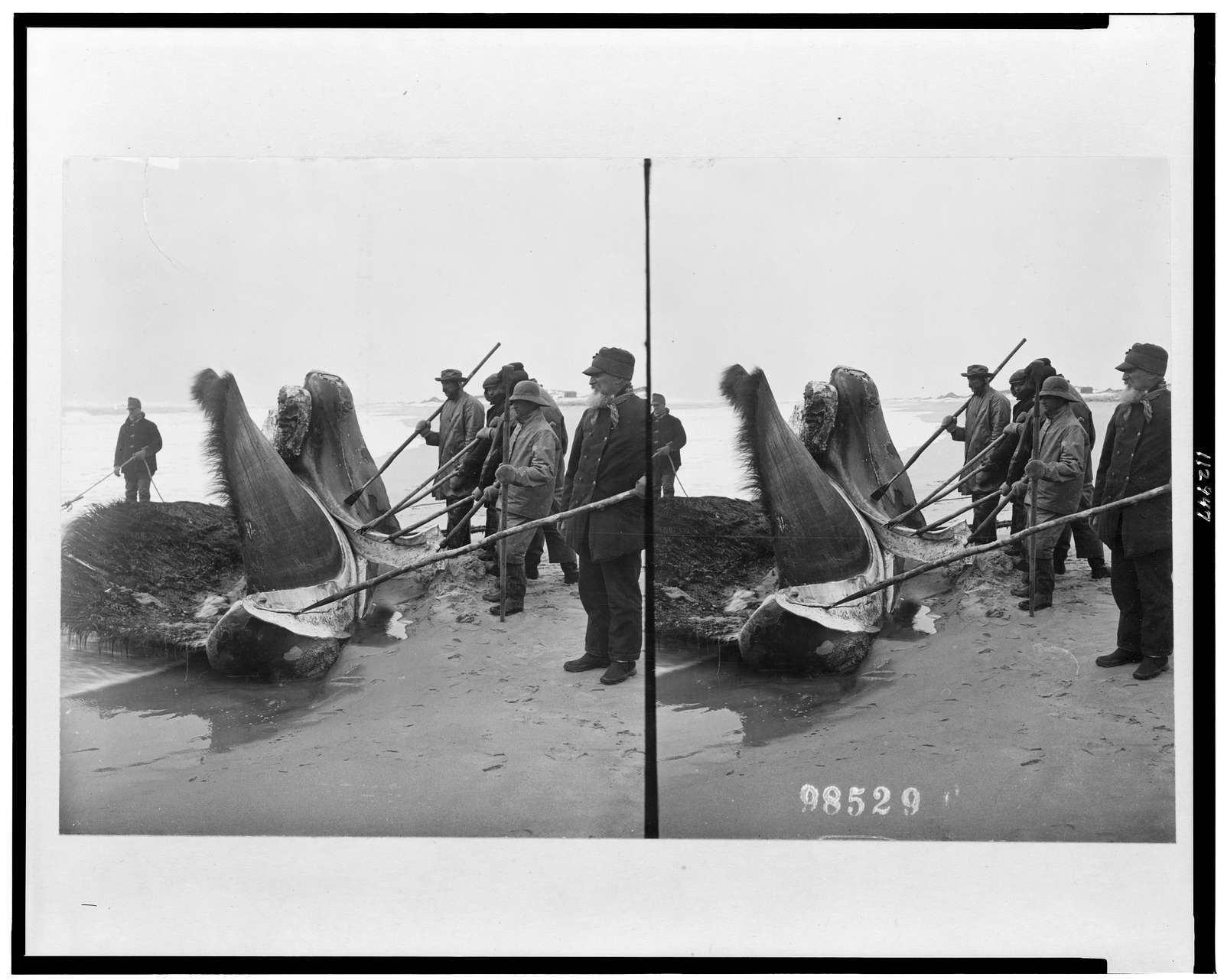 [Men with poles and two large pieces of whale on shore]