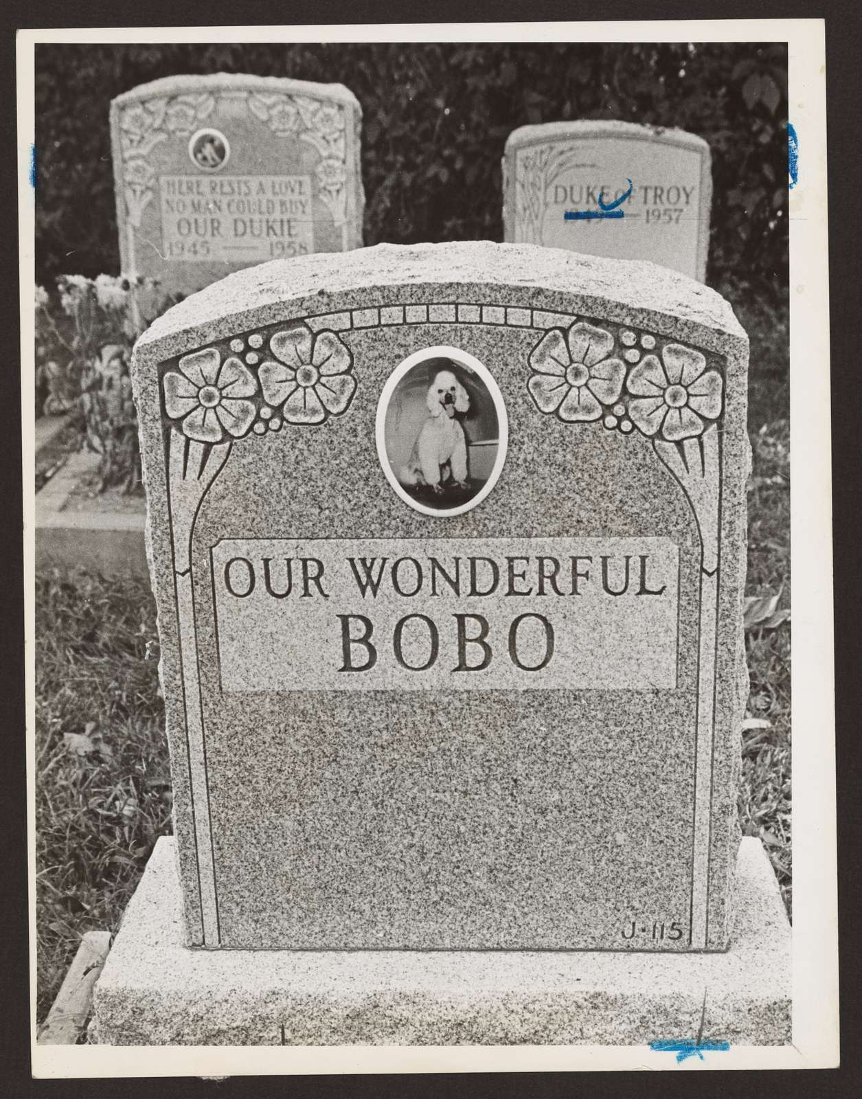 """[Tombstone with picture of a poodle bearing an inscription reading """"Our wonderful Bobo,"""" two other tombstones behind this one] / World Telegram & Sun photo by Phil Stanziola."""