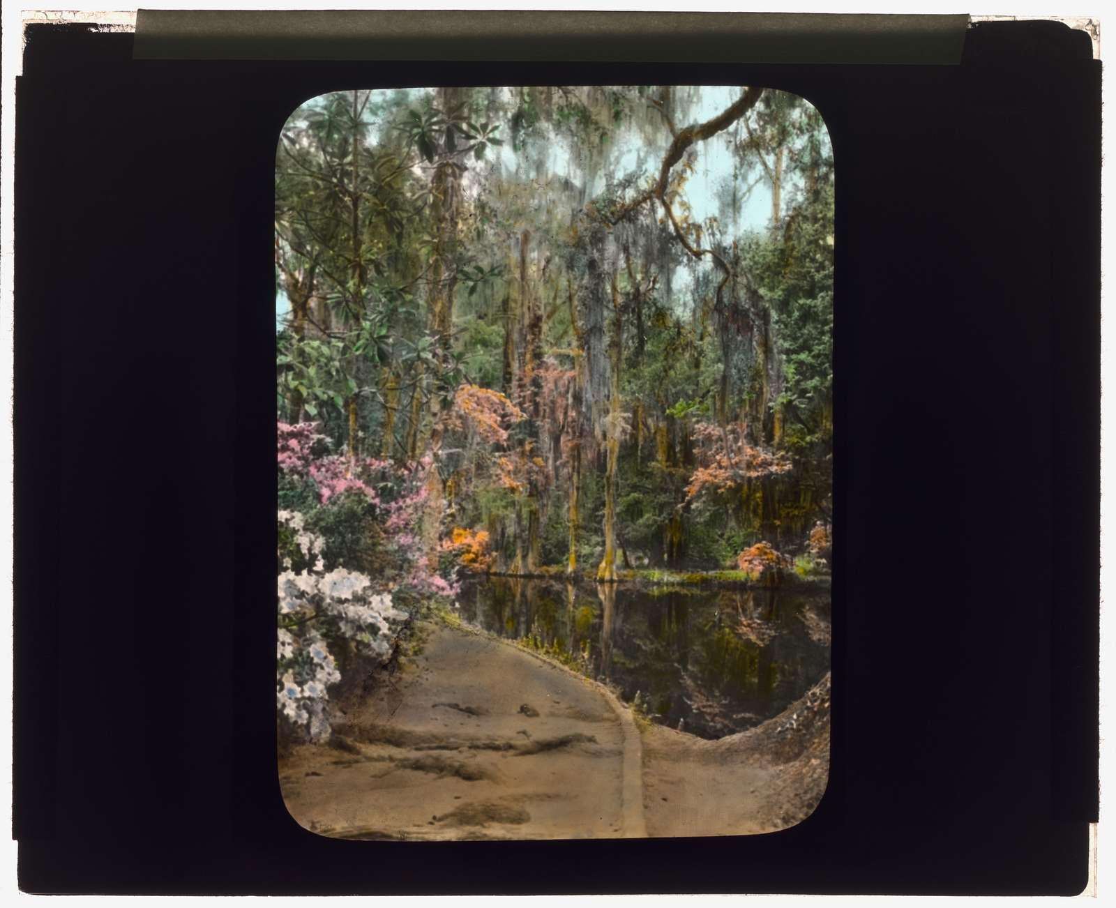 "[""Magnolia Plantation,"" 3550 Ashley River Road, Charleston, South Carolina. Azalea reflections in cypress swamp]"