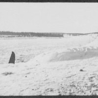 Bactrian camels of a military caravan on the Amur River, distant view