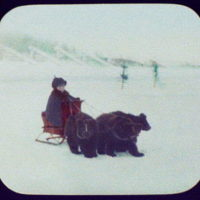 Irkutsk (?) - boy on small sledge pulled by 3 bear cubs