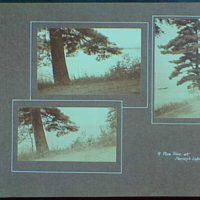 Early years, with images of family, self portraits, landscapes and architectural interiors. Pine tree at Harvey's Lake, Pennsylvania