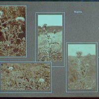 Early years, with images of family, self portraits, landscapes and architectural interiors. Thistles