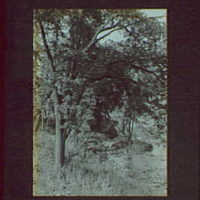 1917-1918, reference prints from negatives. Stream on right with tree on left, vertical