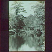 1917-1918, reference prints from negatives. River or lake with pine tree on right, vertical