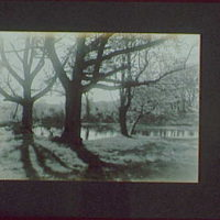 1917-1918, reference prints from negatives. Three trees by pond, horizontal