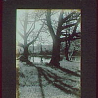 1917-1918, reference prints from negatives. Three trees by pond, vertical