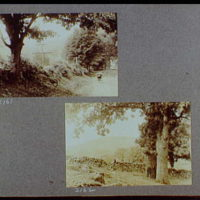 Reference prints, 1919-1920, numbers 2133-2377. Buggy on road; Field with two trees and rock fence in foreground