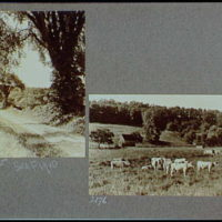 Reference prints, 1919-1920, numbers 2133-2377. Dirt road with trees on right; Cows in field with barn and shed in background I