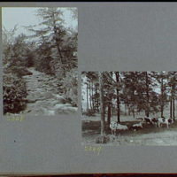 Reference prints, 1919-1920, numbers 2133-2377. Stream flowing over rocks with tall tree on right; Cows resting under trees I