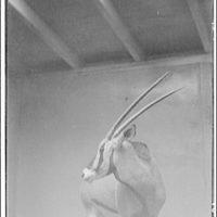 Animals. Antelope's head (turned)