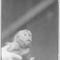 Animals. Monkey (3/4 face)