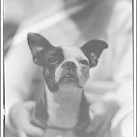Animals. Pictures of a dog XIV