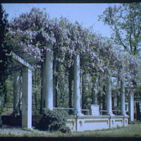 Arlington National Cemetery. Wisteria arbor, horizontal in Arlington National Cemetery II