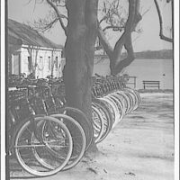 Bicycles. Many bicycles in a line near a tree