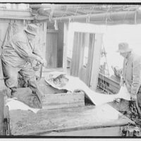 Canadian scenes. Men cleaning a large fish