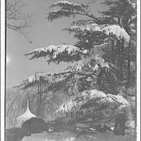 Custis-Lee Mansion. Tree in back yard of Custis-Lee Mansion, winter