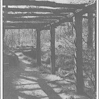 Dumbarton Oaks. View beneath arbor at Dumbarton Oaks