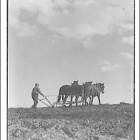 Farm scenes. Three horses with hand plow and man II