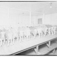 Farming scenes. Goats in barn