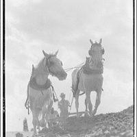 Farming scenes. Horses plowing I
