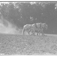 Farming scenes. Three horses pulling disk III
