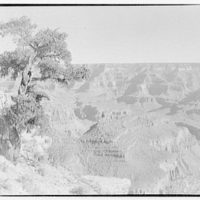 Grand Canyon, Arizona. View of Grand Canyon with tree in foreground II