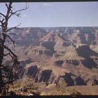 Grand Canyon. South rim of Grand Canyon with dead tree
