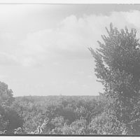 Landscape photographs. View over thickly wooded area I